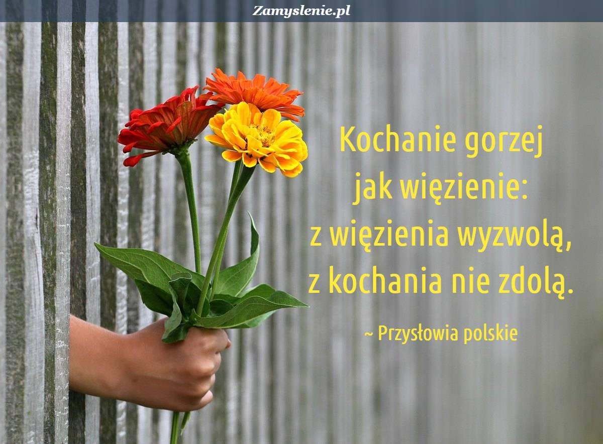 Obraz / mem do cytatu: Kochanie gorzej jak więzienie: z więzienia wyzwolą, z kochania nie zdolą.