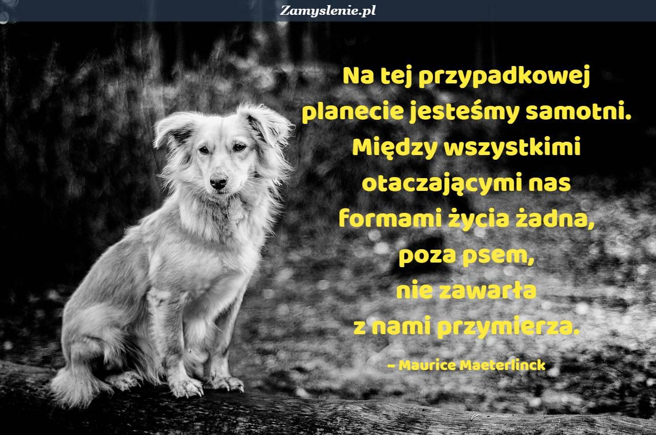 Obraz / mem do cytatu: Na tej przypadkowej planecie jesteśmy samotni. Między wszystkimi otaczającymi nas formami życia żadna, poza psem, nie zawarła z nami przymierza.
