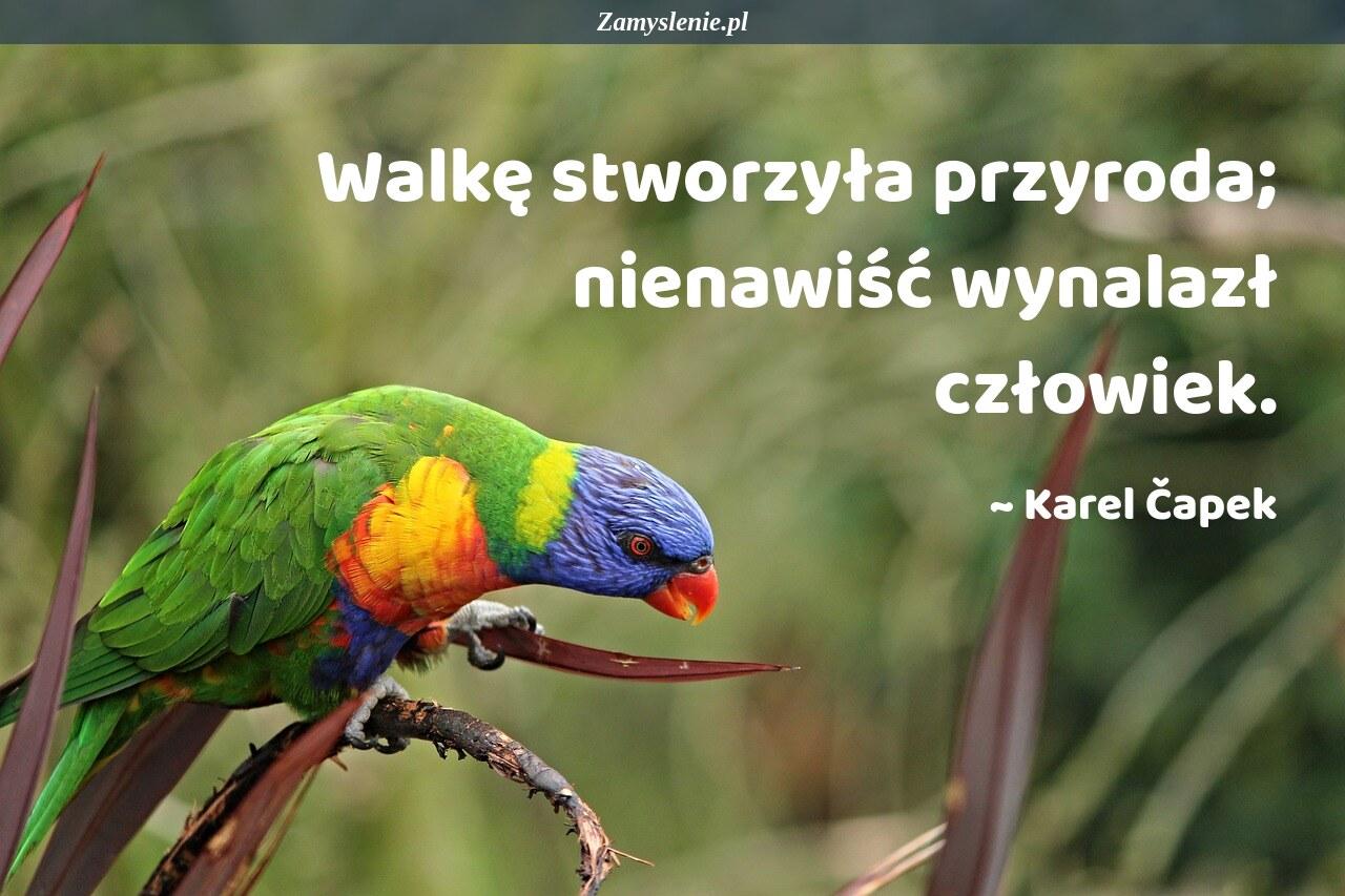 Obraz / mem do cytatu: Walkę stworzyła przyroda; nienawiść wynalazł człowiek.