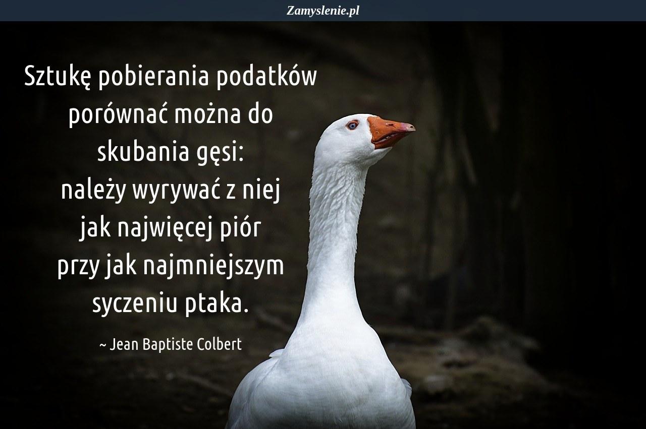 Obraz / mem do cytatu: Sztukę pobierania podatków porównać można do skubania gęsi: należy wyrywać z niej jak najwięcej piór przy jak najmniejszym syczeniu ptaka.