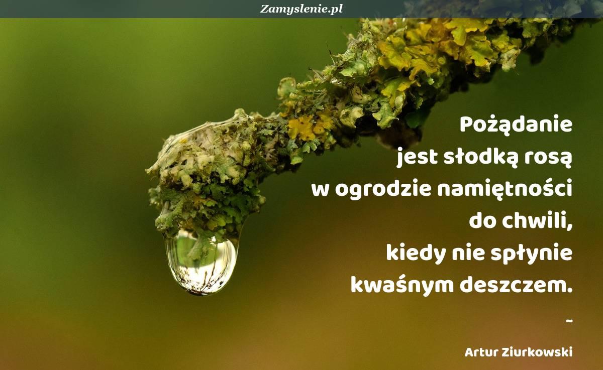 Obraz / mem do cytatu: Pożądanie jest słodką rosą w ogrodzie namiętności do chwili, kiedy nie spłynie kwaśnym deszczem.