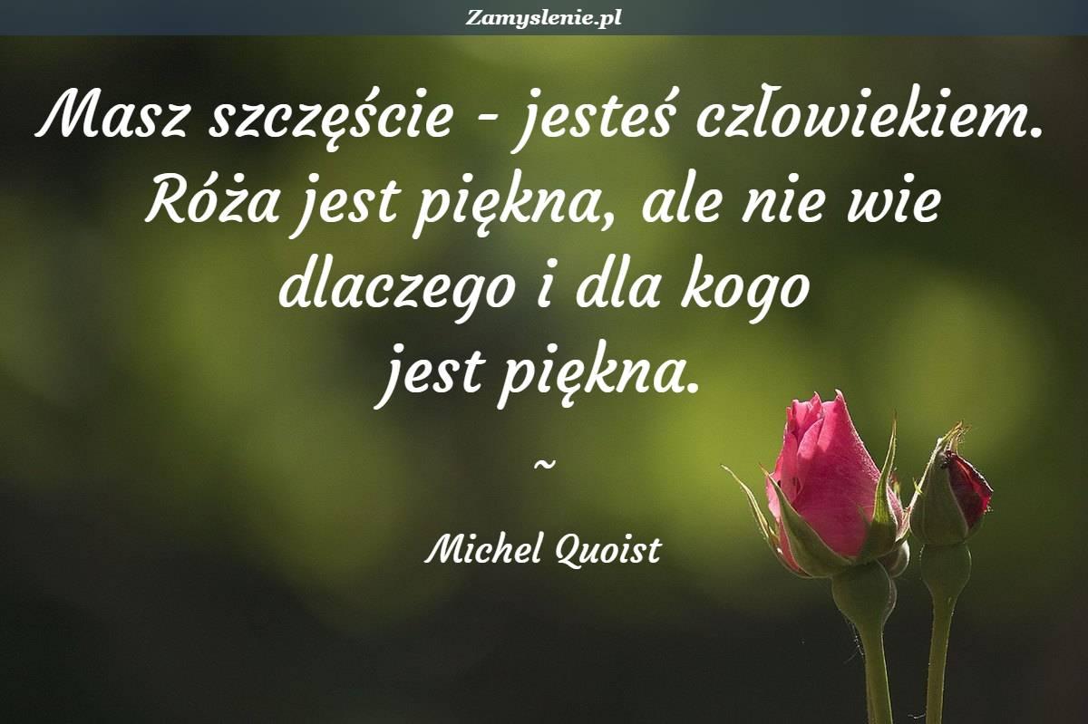 Obraz / mem do cytatu: Masz szczęście - jesteś człowiekiem. Róża jest piękna, ale nie wie dlaczego i dla kogo jest piękna.