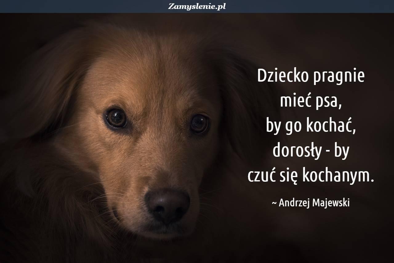 Obraz / mem do cytatu: Dziecko pragnie mieć psa, by go kochać, dorosły - by czuć się kochanym.