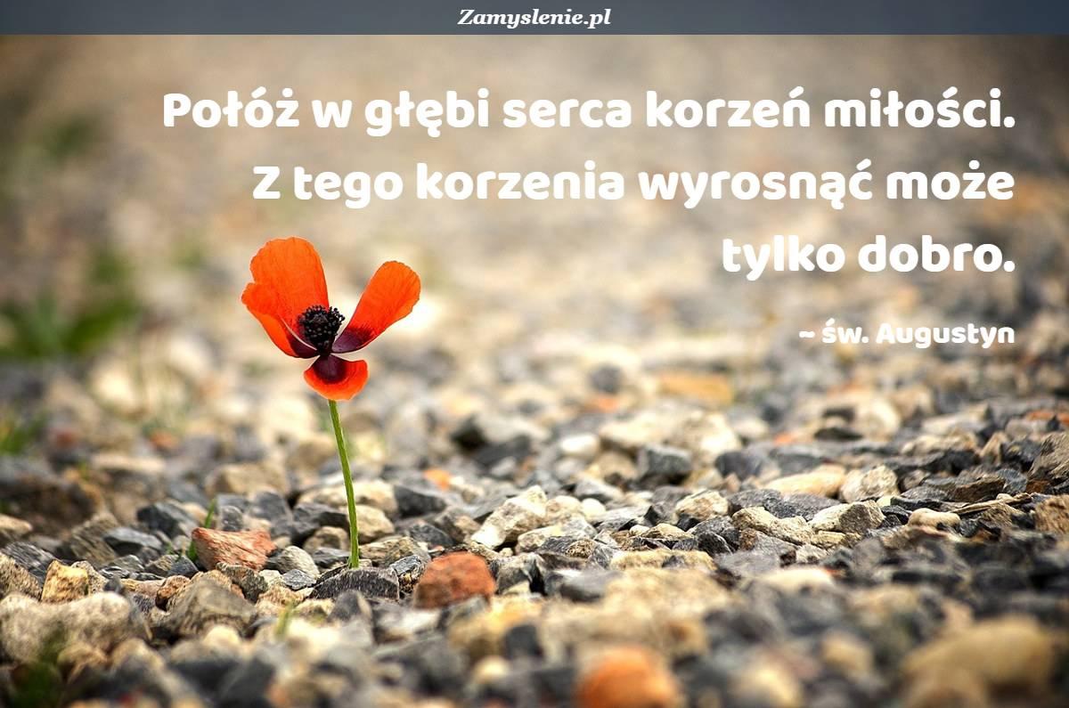Obraz / mem do cytatu: Połóż w głębi serca korzeń miłości. Z tego korzenia wyrosnąć może tylko dobro.