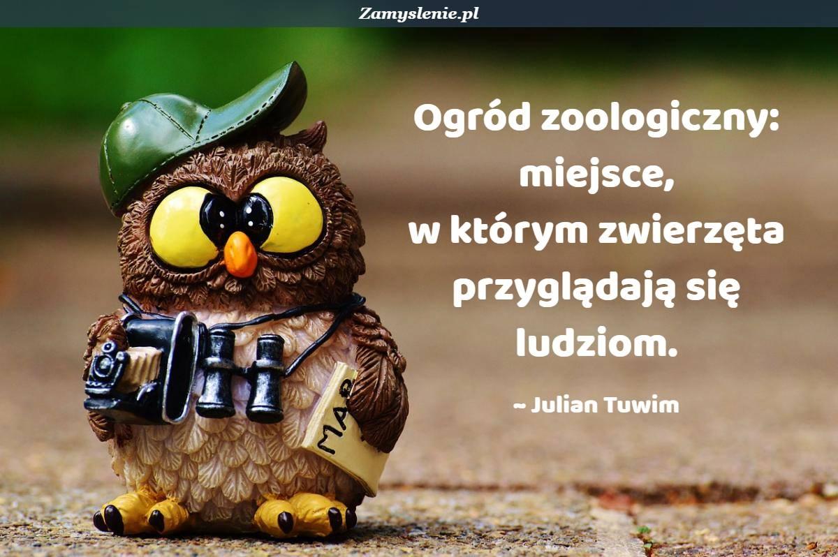Obraz / mem do cytatu: Ogród zoologiczny: miejsce, w którym zwierzęta przyglądają się ludziom.