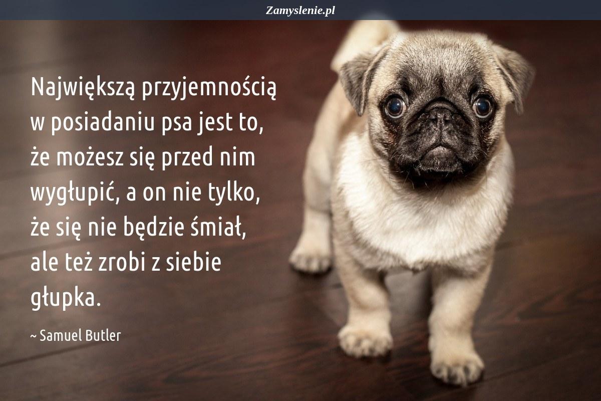 Obraz / mem do cytatu: Największą przyjemnością w posiadaniu psa jest to, że możesz się przed nim wygłupić, a on nie tylko, że się nie będzie śmiał, ale też zrobi z siebie głupka.