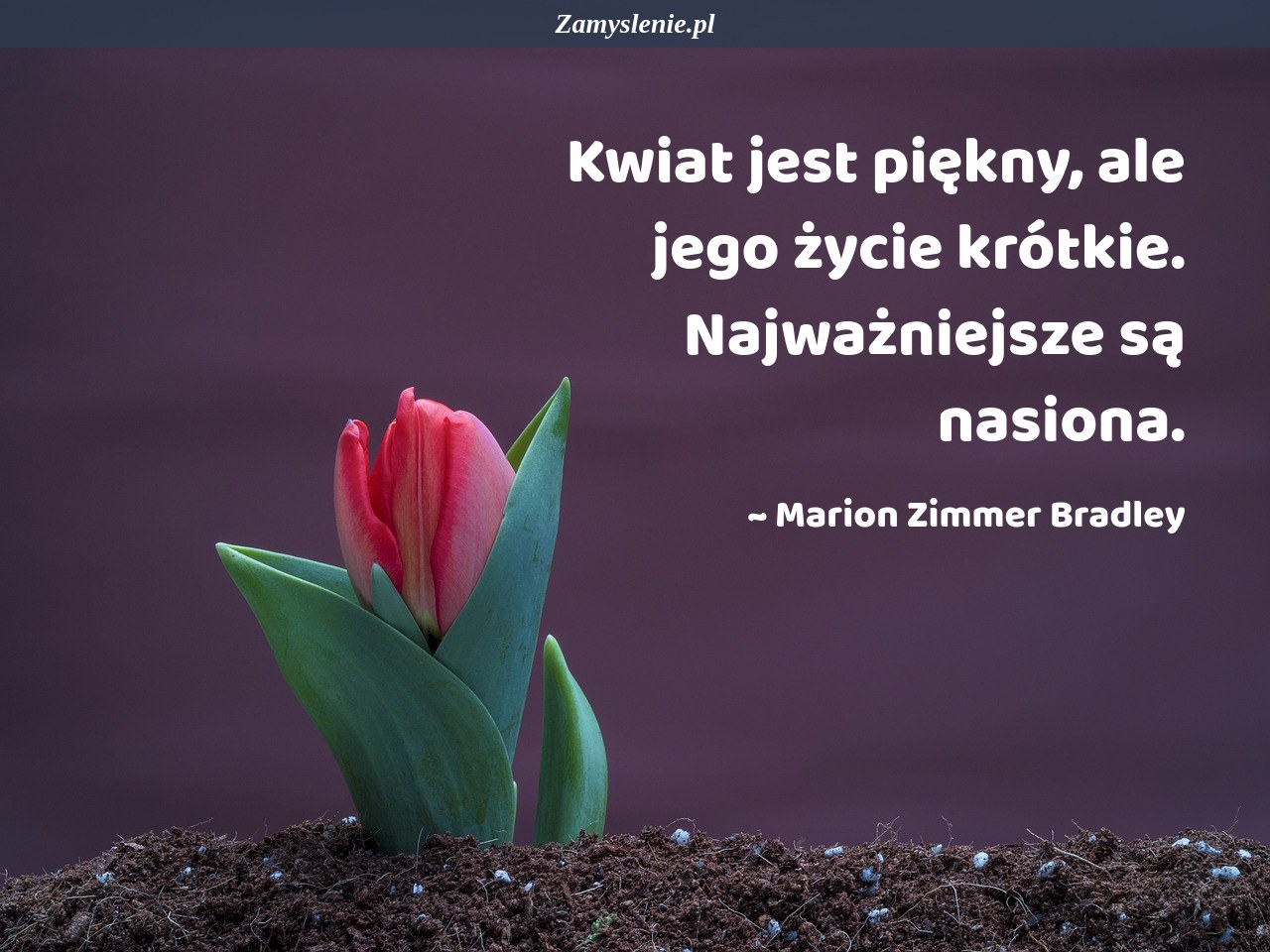 Obraz / mem do cytatu: Kwiat jest piękny, ale jego życie krótkie. Najważniejsze są nasiona.