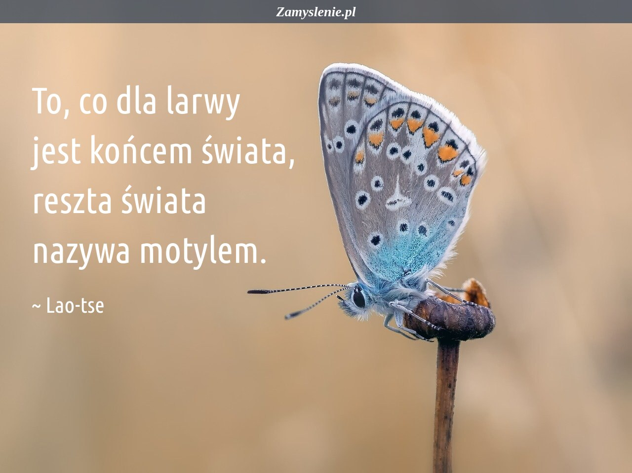 Obraz / mem do cytatu: To, co dla larwy jest końcem świata, reszta świata nazywa motylem.