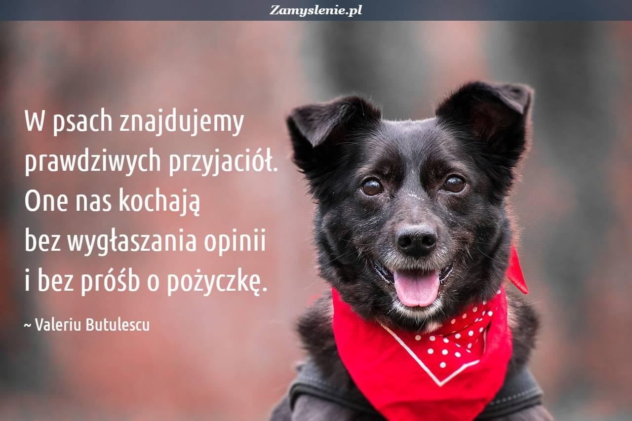 Obraz / mem do cytatu: W psach znajdujemy prawdziwych przyjaciół. One nas kochają bez wygłaszania opinii i bez próśb o pożyczkę.