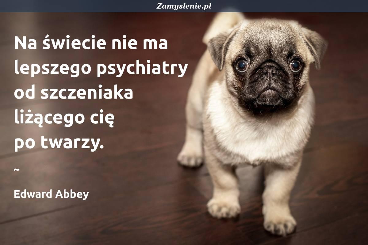 Obraz / mem do cytatu: Na świecie nie ma lepszego psychiatry od szczeniaka liżącego cię po twarzy.