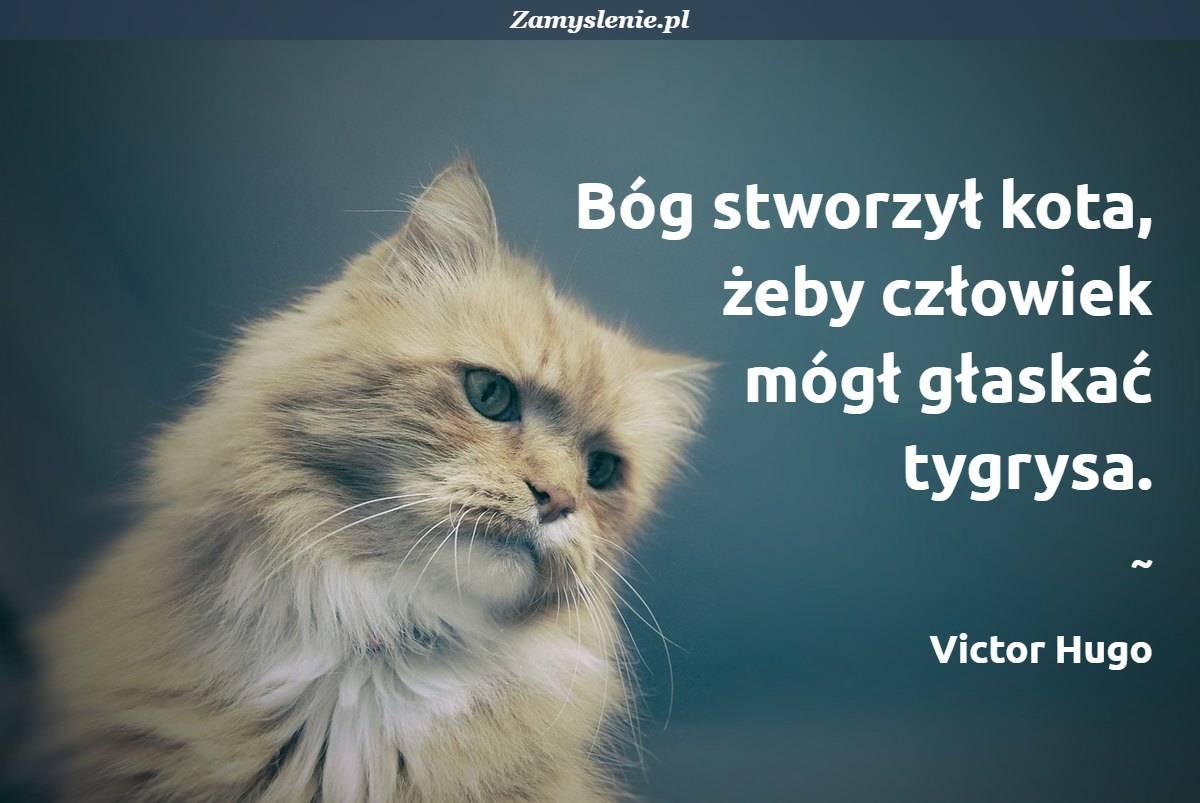 Obraz / mem do cytatu: Bóg stworzył kota, żeby człowiek mógł głaskać tygrysa.