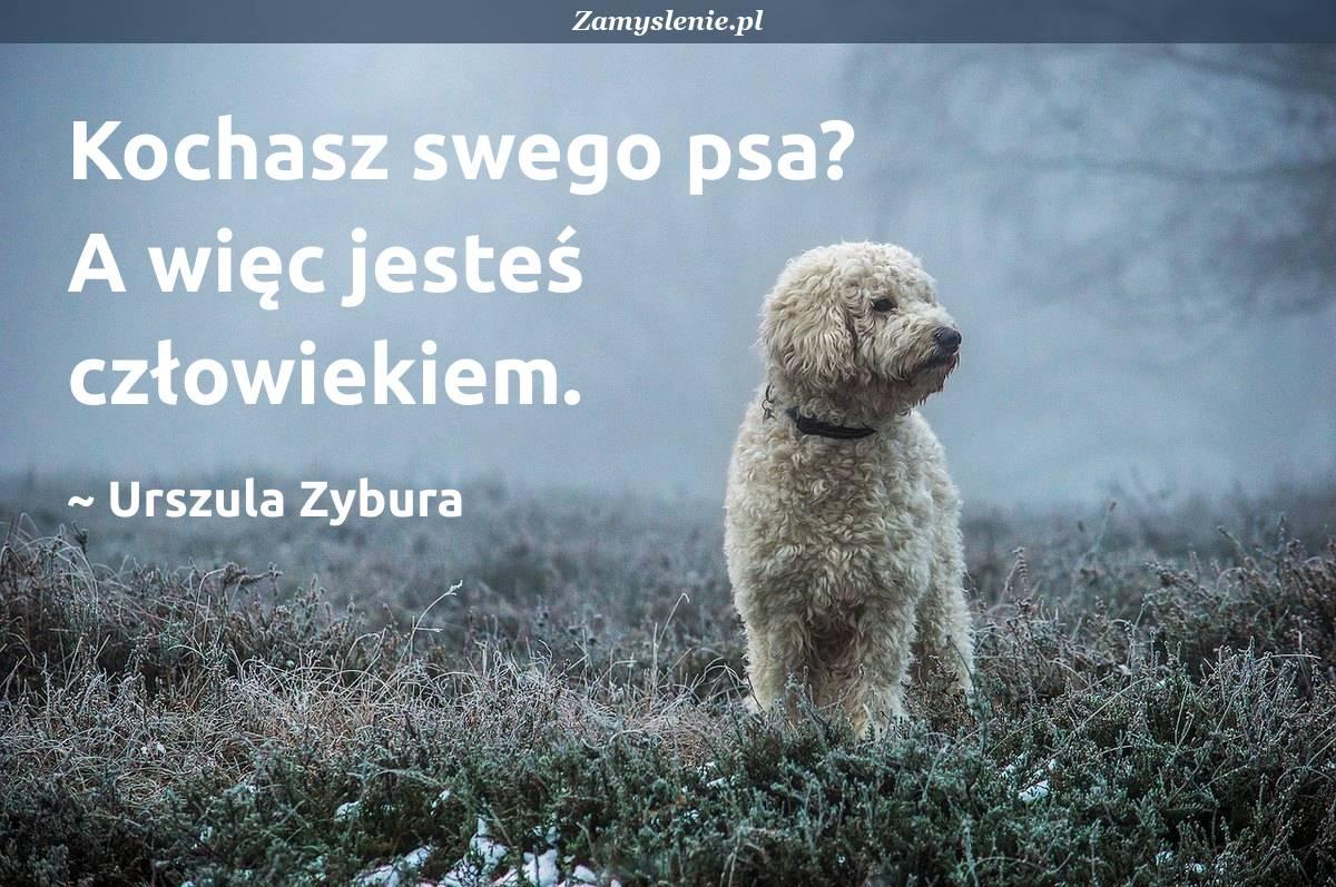 Obraz / mem do cytatu: Kochasz swego psa? A więc jesteś człowiekiem.