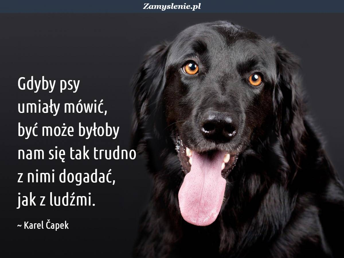 Obraz / mem do cytatu: Gdyby psy umiały mówić, być może byłoby nam się tak trudno z nimi dogadać, jak z ludźmi.