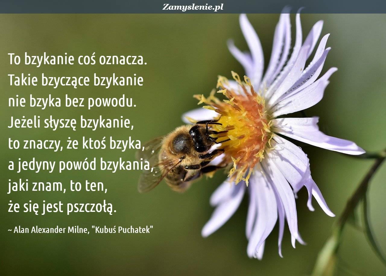 Obraz / mem do cytatu: To bzykanie coś oznacza. Takie bzyczące bzykanie nie bzyka bez powodu. Jeżeli słyszę bzykanie, to znaczy, że ktoś bzyka, a jedyny powód bzykania, jaki znam, to ten, że się jest pszczołą.