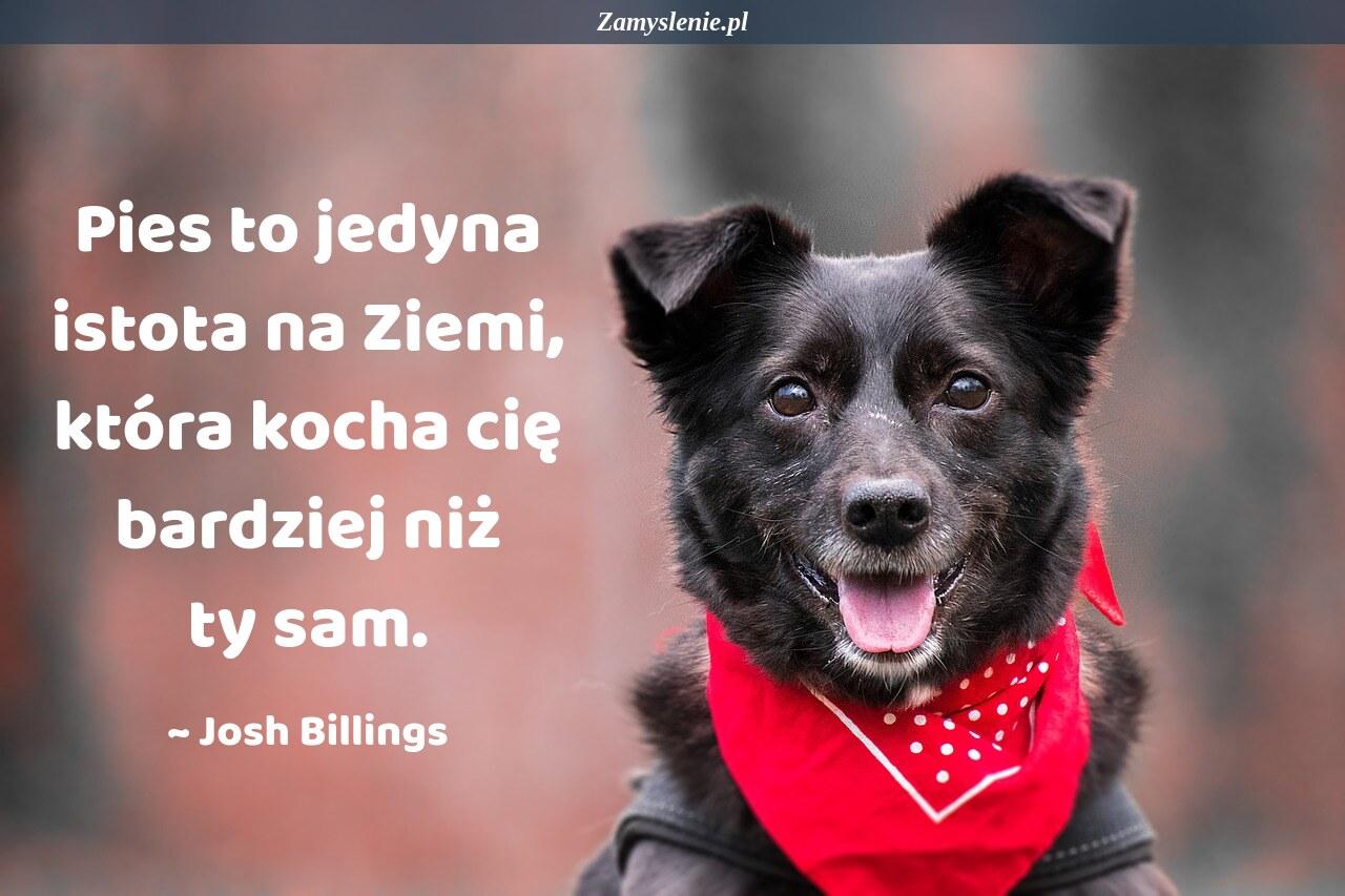 Obraz / mem do cytatu: Pies to jedyna istota na Ziemi, która kocha cię bardziej niż ty sam.