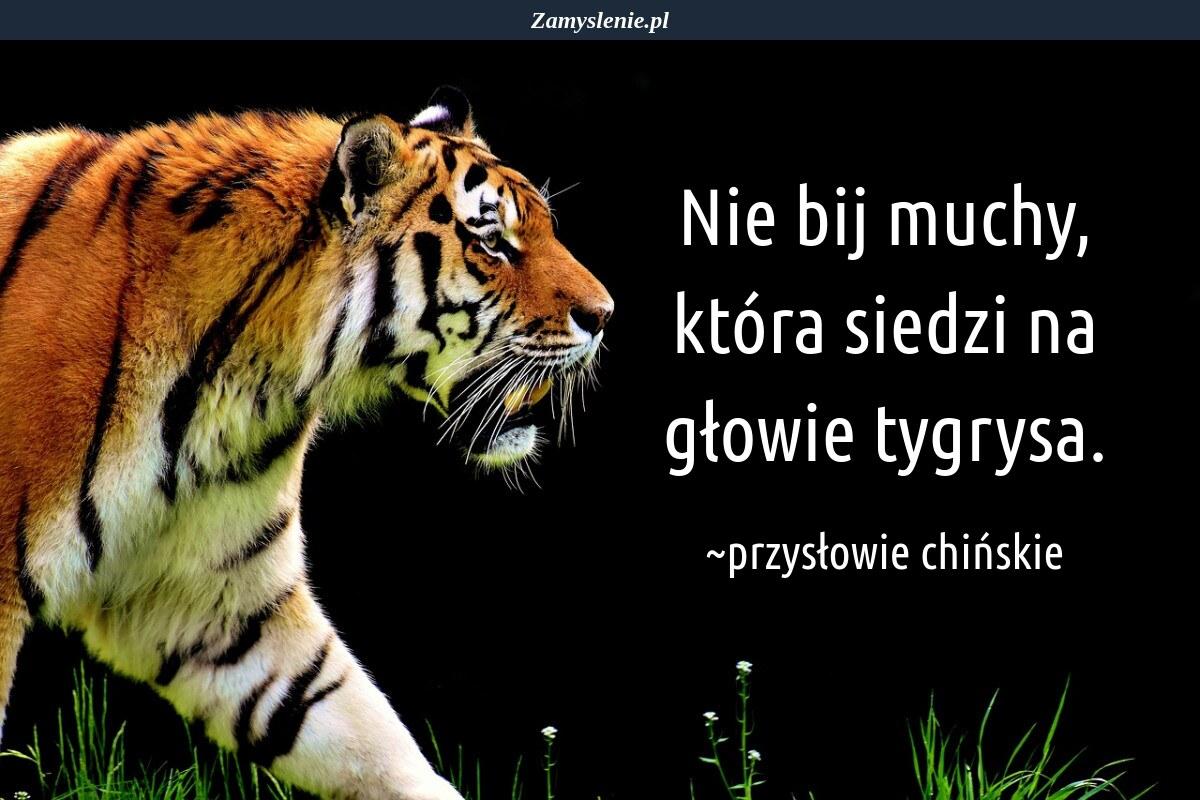 Obraz / mem do cytatu: Nie bij muchy, która siedzi na głowie tygrysa.