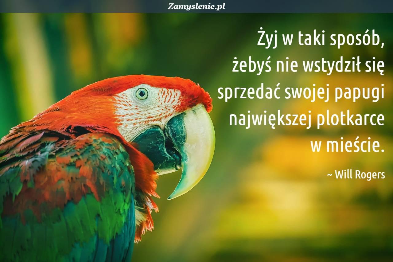 Obraz / mem do cytatu: Żyj w taki sposób, żebyś nie wstydził się sprzedać swojej papugi największej plotkarce w mieście.