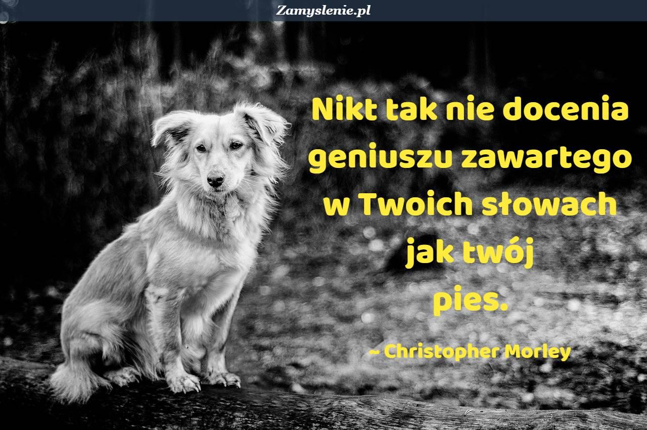 Obraz / mem do cytatu: Nikt tak nie docenia geniuszu zawartego w twoich słowach jak twój pies.