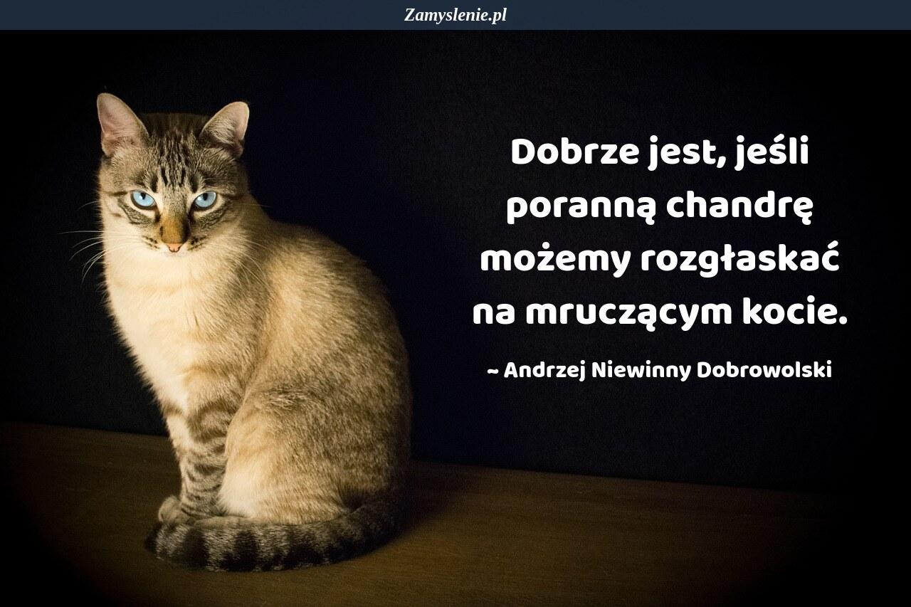 Obraz / mem do cytatu: Dobrze jest, jeśli poranną chandrę możemy rozgłaskać na mruczącym kocie.