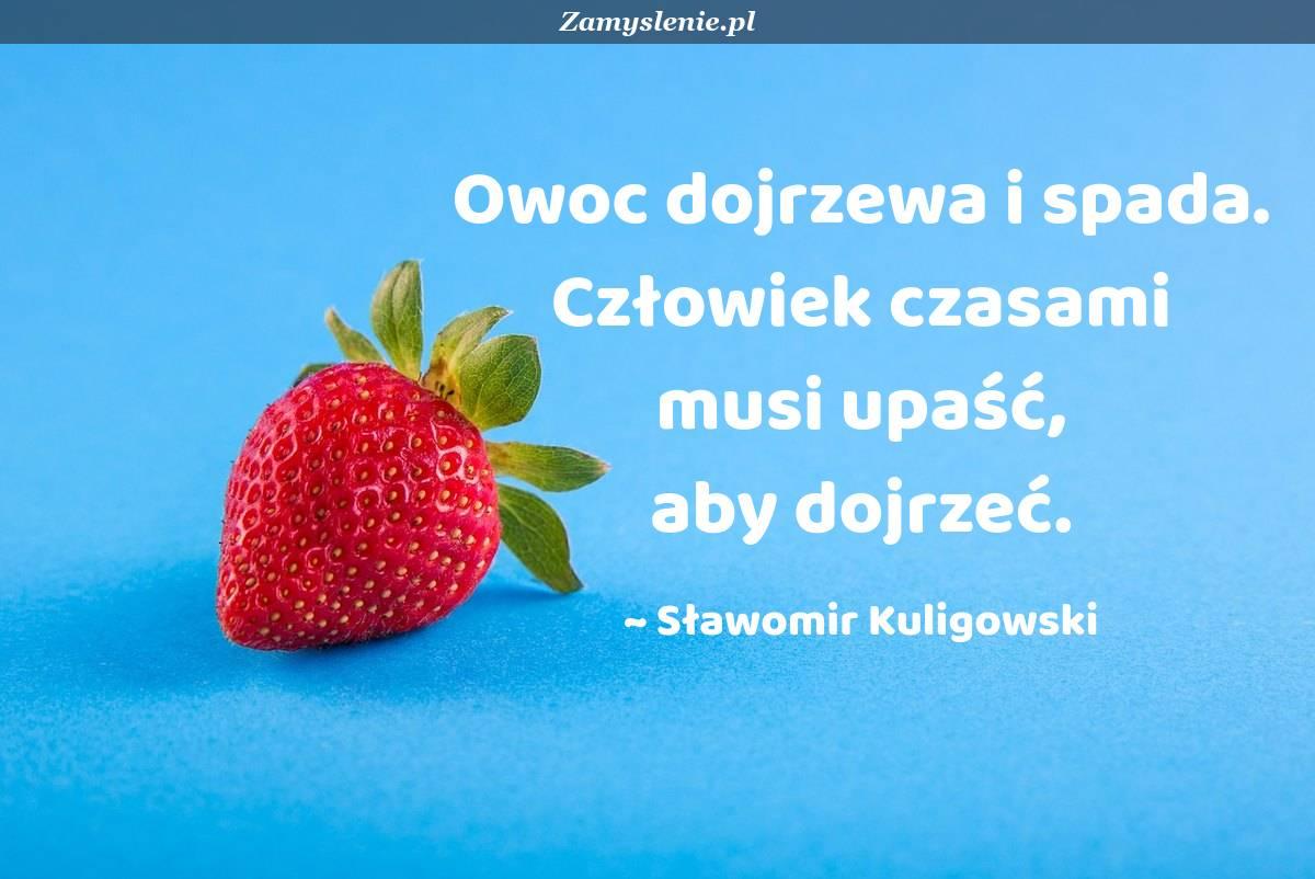 Obraz / mem do cytatu: Owoc dojrzewa i spada. Człowiek czasami musi upaść, aby dojrzeć.