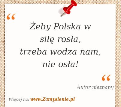 Obraz / mem do cytatu: Żeby Polska w siłę rosła, trzeba wodza nam, nie osła!
