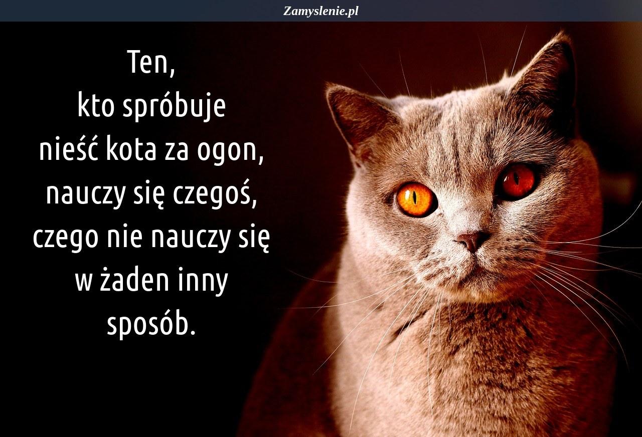 Obraz / mem do cytatu: Ten, kto spróbuje nieść kota za ogon, nauczy się czegoś, czego nie nauczy się w żaden inny sposób.