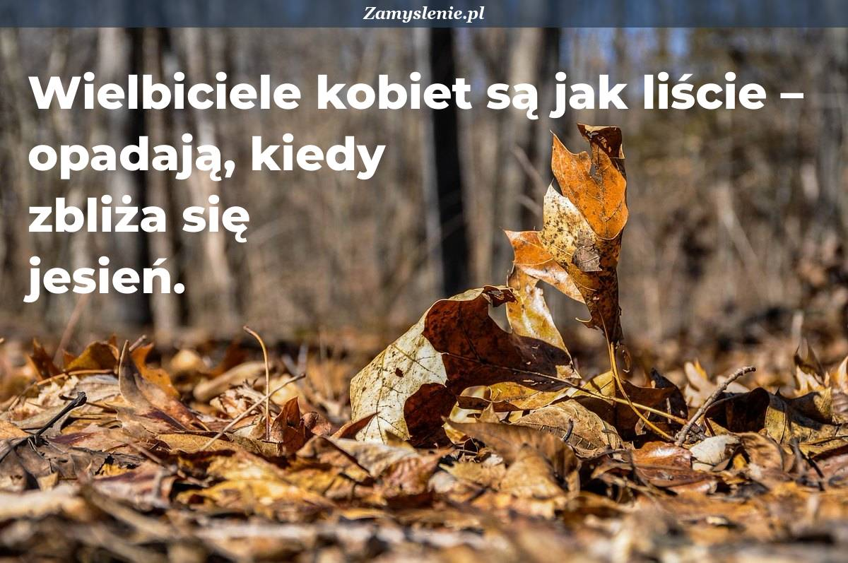 Obraz / mem do cytatu: Wielbiciele kobiet są jak liście – opadają, kiedy zbliża się jesień.