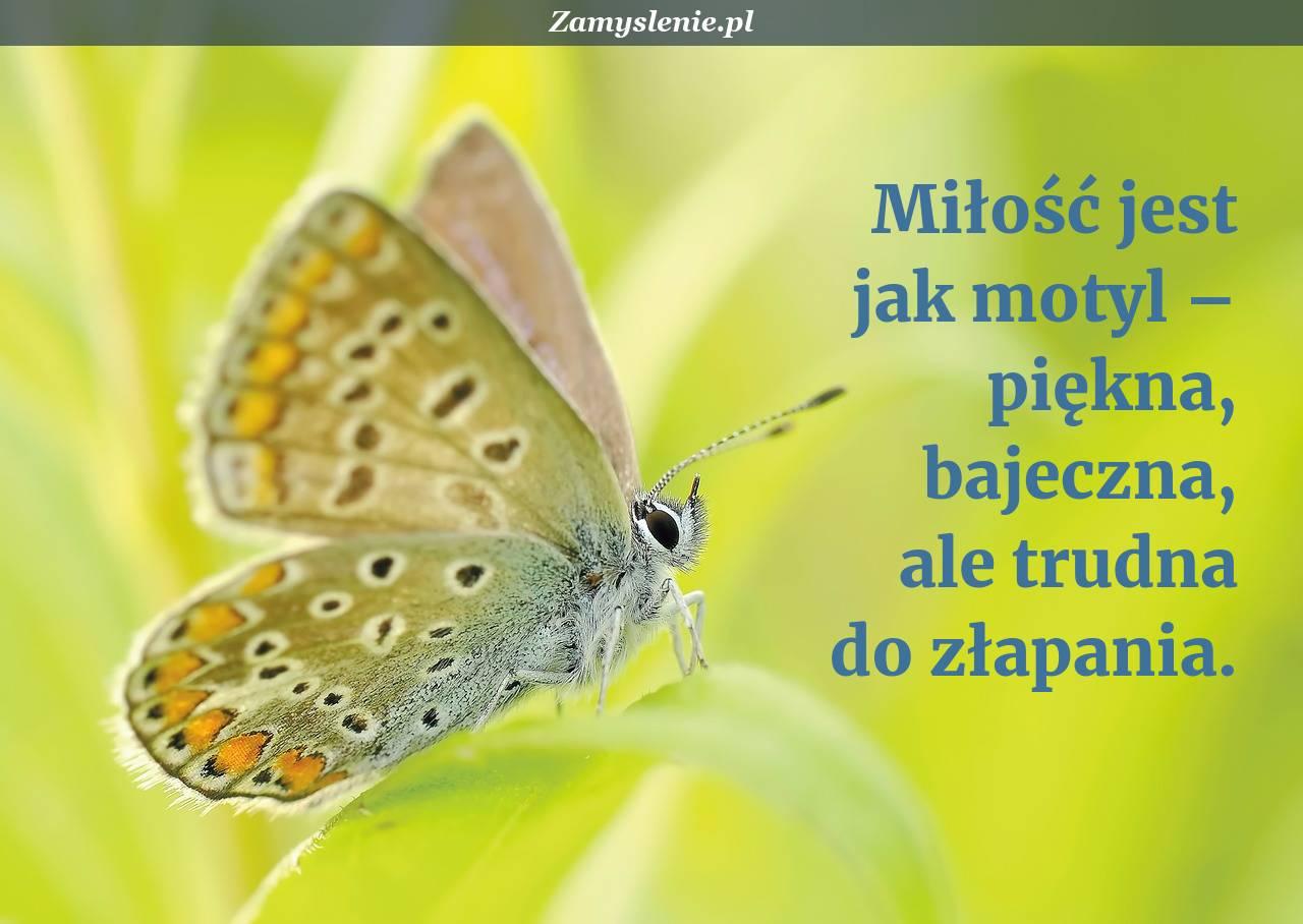 Obraz / mem do cytatu: Miłość jest jak motyl – piękna, bajeczna, ale trudna do złapania.