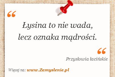 Obraz / mem do cytatu: Łysina to nie wada, lecz oznaka mądrości.