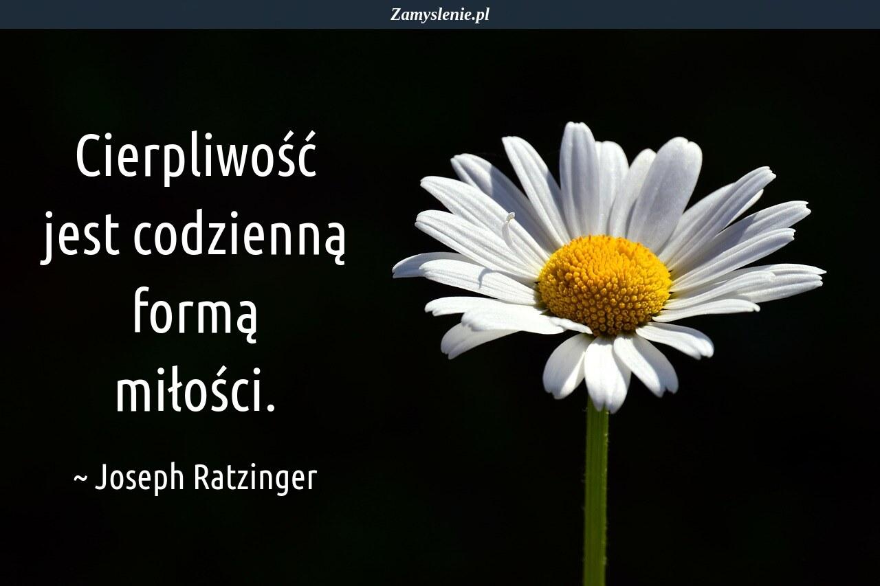 Obraz / mem do cytatu: Cierpliwość jest codzienną formą miłości.