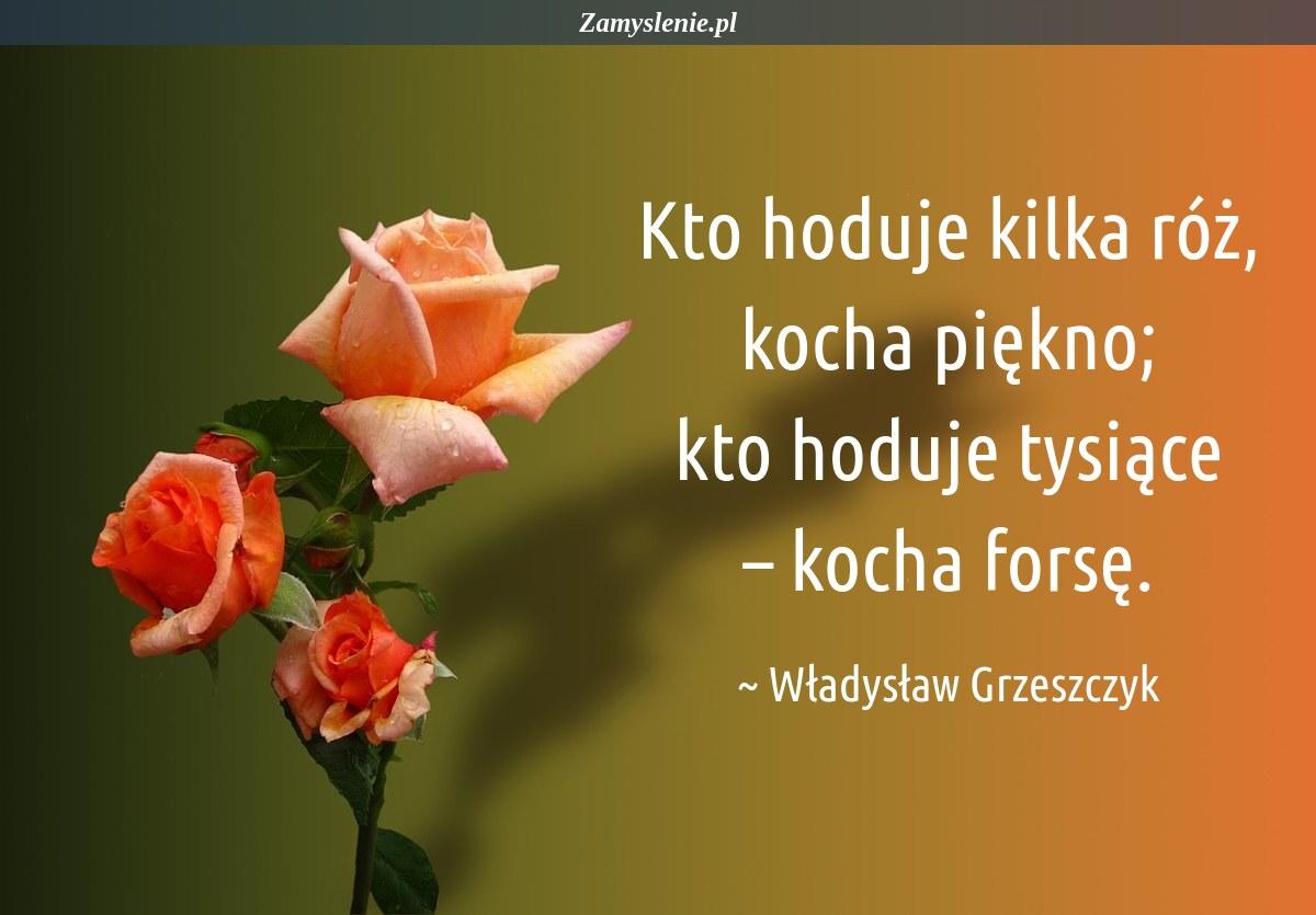 Obraz / mem do cytatu: Kto hoduje kilka róż, kocha piękno; kto hoduje tysiące – kocha forsę.