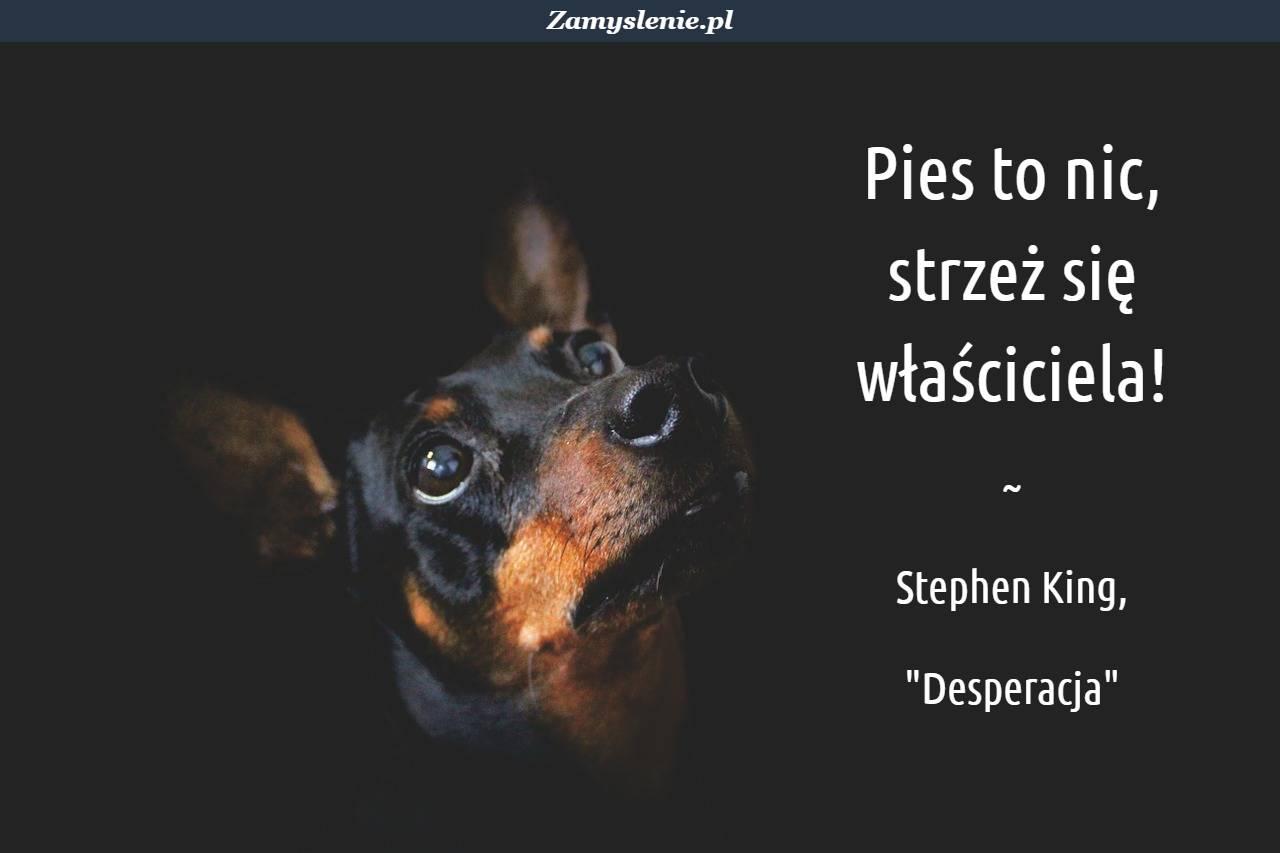 Obraz / mem do cytatu: Pies to nic, strzeż się właściciela!