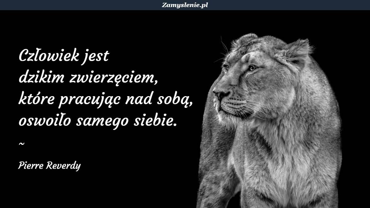 Obraz / mem do cytatu: Człowiek jest dzikim zwierzęciem, które pracując nad sobą, oswoiło samego siebie.