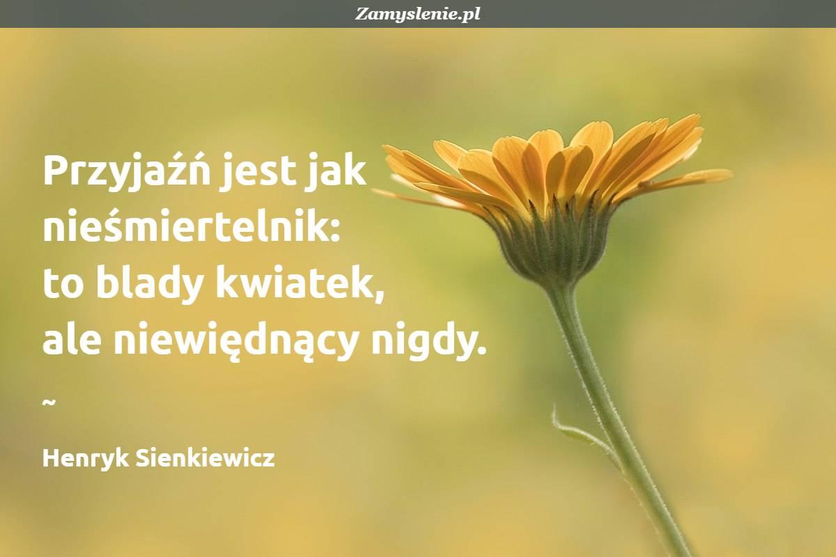 Obraz / mem do cytatu: Przyjaźń jest jak nieśmiertelnik: to blady kwiatek, ale niewiędnący nigdy.