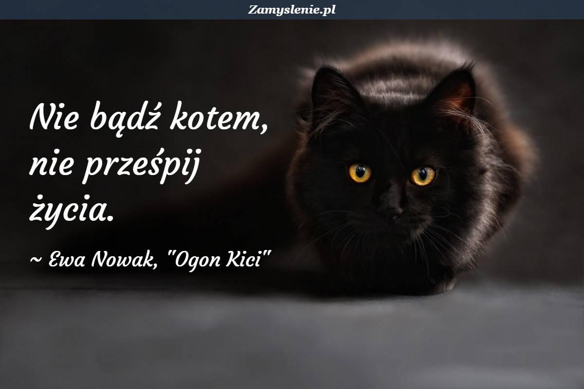 Obraz / mem do cytatu: Nie bądź kotem, nie prześpij życia.