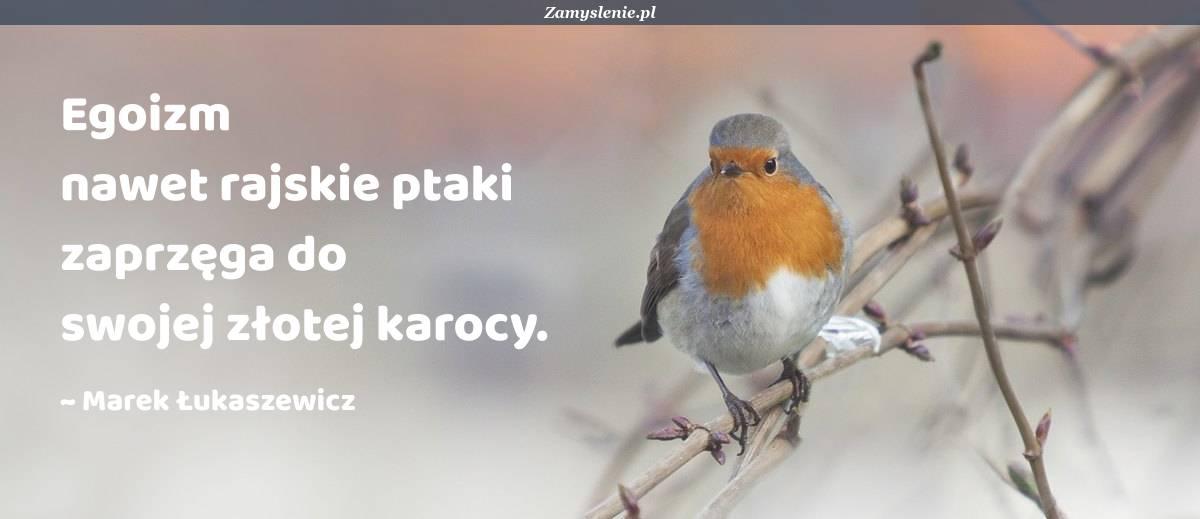 Obraz / mem do cytatu: Egoizm nawet rajskie ptaki zaprzęga do swojej złotej karocy.
