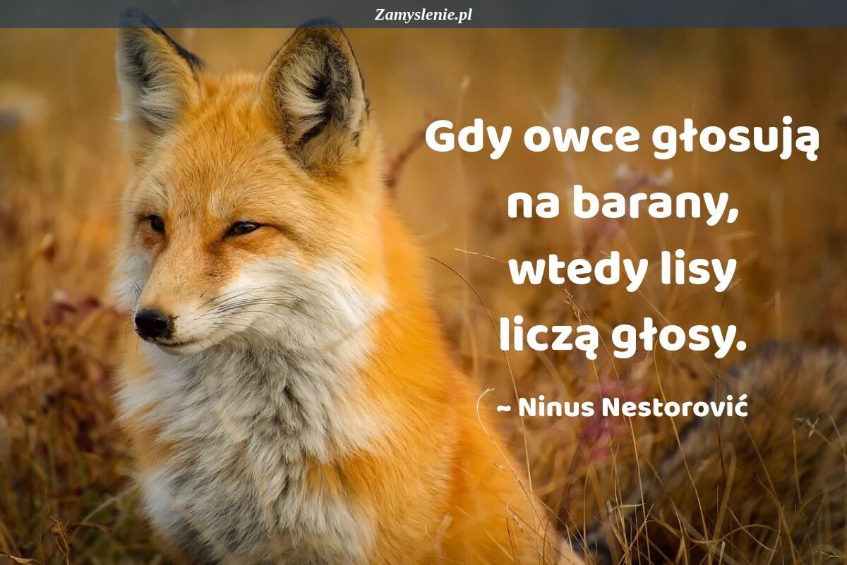 Obraz / mem do cytatu: Gdy owce głosują na barany, wtedy lisy liczą głosy.
